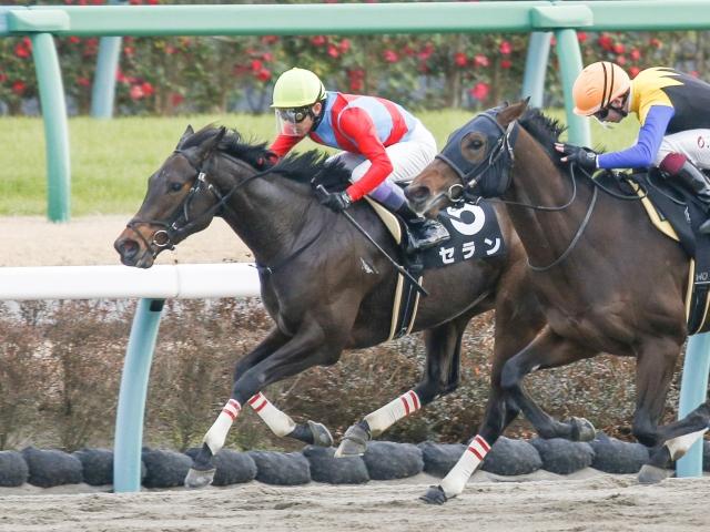 netkeiba.com【UAEオークス】(UAE・G3)セラン、武豊騎手で出走へ