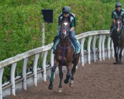 新種牡馬カンパニー産駒のオミキ